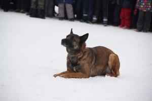 Кинологи назвали основные команды для служебных собак