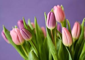 """На рынке цветов ожидают """"невиданный ажиотаж""""."""