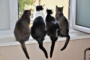 Эрмитажные коты к концу весны получат около 3 тысяч евро.