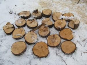 Житель Самарской области незаконно спилил 54 дерева