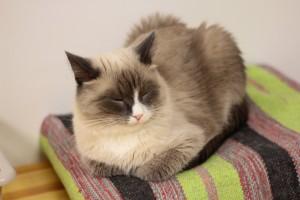 Россияне заводят кошек намного чаще, чем собак