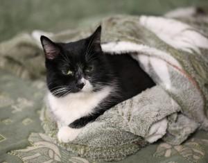 Пушистое счастье: больше всего котов и кошек любят в Самаре