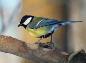 Самарских ребят приглашают понаблюдать за птицами в новом конкурсе Чудо в перьях»