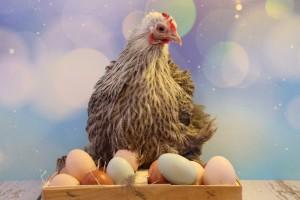 По данным Минсельхоза, динамика цен стала следствием подорожания кормов, снижения объемов производства из-за птичьего гриппа, а также сокращения импорта инкубационных яиц.