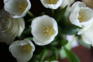 Роспотребнадзор дал советы по определению свежести цветов