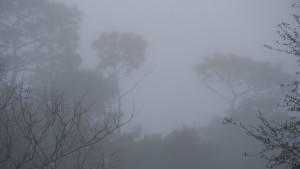 Туман снова накроет Самарскую область