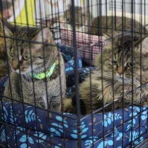 Фестиваль для животных - в Самаре бездомные кошки и собаки ищут семью