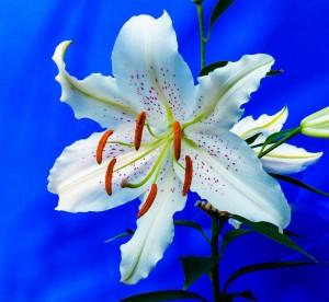 Эксперт назвала самые стойкие цветы для букетов.