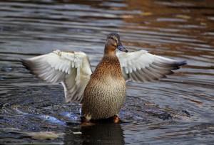 Самарских любителей птиц приглашает фотоконкурс Большой год 2021