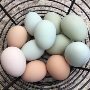 Птицефабрики могут перестать производить отборные яйца