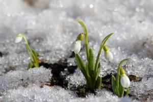 Изначально каток должен был проработать до 5 марта,но ввиду благоприятных для катания погодных условий было принято решение продлить сезон до 21 числа.
