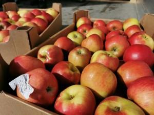В Большечерниговском районе Самарской области задержана фурас польскими яблоками -21 тонна.