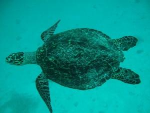 На Мадагаскаре 15 человек съели черепаху и умерли