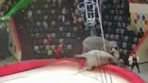 Драку слонов в казанском цирке проверит прокуратура