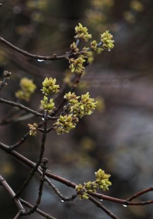 Самару ждет уже не только календарная весна