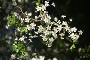 Иммунолог назвал методы лечения аллергии