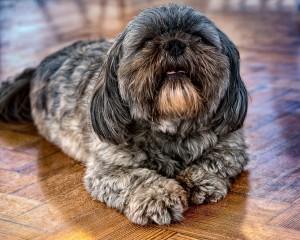 """Изменения предлагаются в закон """"Об ответственном обращении с животными"""" и другие законодательные акты."""