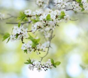Продление майских праздников не подтвердили