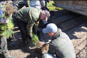 Более 5 миллионов саженцев пополнят лесной фонд Самарской области