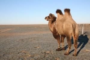 Самарские пограничники напоминают о правилах выпаса скота