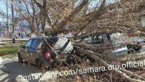 В Самаре дерево упало на припаркованные автомобили