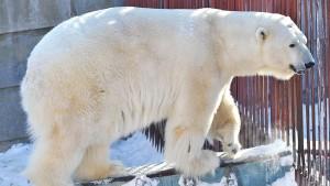 Медведю было 24 года. Он мог бы еще жить.