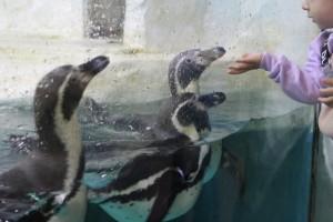 В самарском океанариуме отметили Всемирный день пингвина