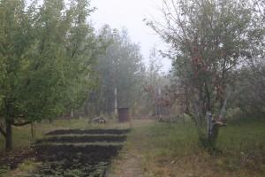 Почти треть россиян отказывается на дачах от газонов в пользу грядок