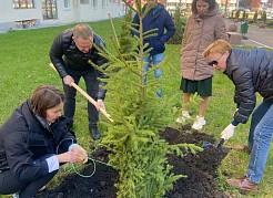 Активные горожане сами выбрали место, где высадили новые растения – несколько десятков туй и елей.