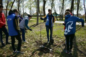 Накануне 9 мая 120 молодых деревьев украсили Парк Победы в Кинеле