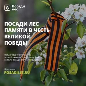 Россияне смогут посадить лес в честь Дня Победы
