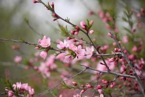 Самарцы снова могут погулять по Ботаническому саду