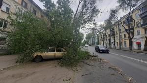 На проспекте Масленникова в Самаре дерево упало на машину