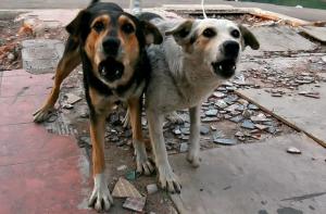 За несколько лет от укусов бездомных собак в городе погибли три женщины.