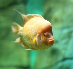 В офисах стали реже заводить рыбок и кошек