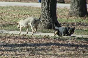 В Красноярском районе Самарской области в селе Молгачи от бешенства погибла собака