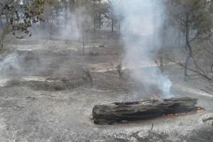 В прошедшие сутки в регионе зарегистрировано 23 природных пожара.