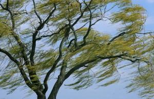 При усилении ветра следует ограничить выход из зданий.