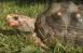 Самарский зоопарк отмечает Всемирный день черепахи