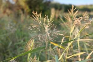 Названы растения, за которые дачникам грозят большие штрафы