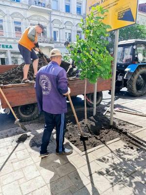 Улицу Куйбышева в Самаре озеленяют