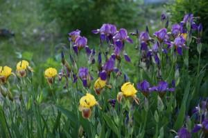 После аномальной жары в Самаре восстанавливают цветники