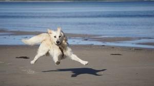 Вступили в силу единые правила пользования пляжами, которые в том числе устанавливают запрет приводить на пляжи животных, за исключением собак-поводырей.