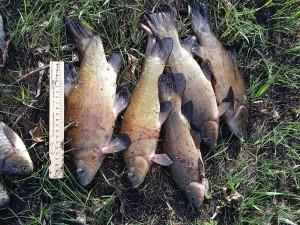 В Самарской области выявили несколько фактов незаконного лова рыбы и раков