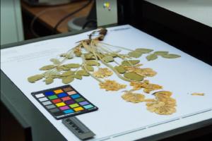 Самарский университет разместит в Интернете крупнейшую коллекцию растений Волго-Уральского региона России