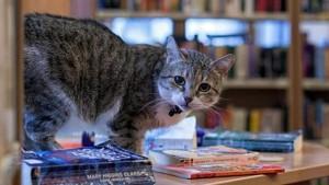 Лучшим служебным котом Петербурга стал Матрос Васильевич, живущий на судостроительном заводе «Северная верфь».