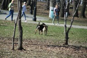 Самарцы продолжают жаловаться на агрессивных собак