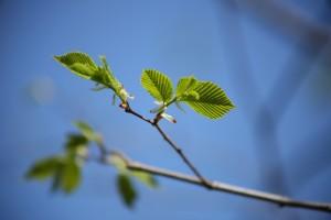 Проект «Посади Лес» предлагает компенсировать свой углеродный след