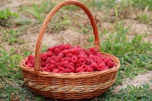 Взрослому человеку можно съедать без вреда для здоровья до 400 г ягоды в день.