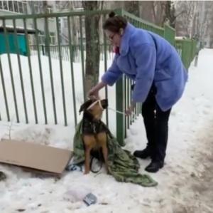 Спасенная полицейскими и волонтерами в Самаре собака обрела дом